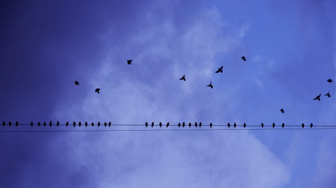 birds, air, order, pattern